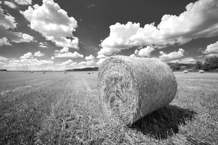 bails: Hay bails on the field under blue sky Stock Photo