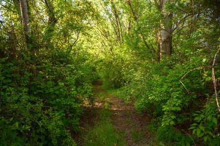 confined: Small Pathway going trough the forest outdoors Stock Photo
