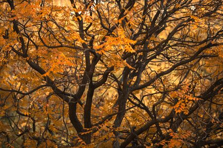 autumn in the park: Abstract hoto of some winter branches closeup