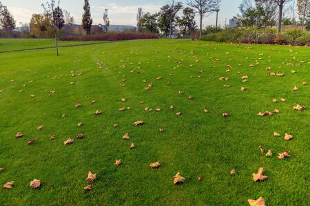medow: Outdoor photo grass and trees in the park with good lights