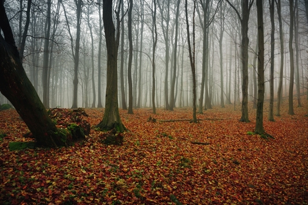 mistery: Autumn day in the enchanted forest at fall