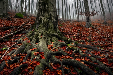 roots: Autumn day in the enchanted forest at fall