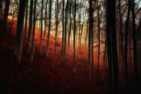 woodland  horror: Autumn day in the enchanted forest at fall
