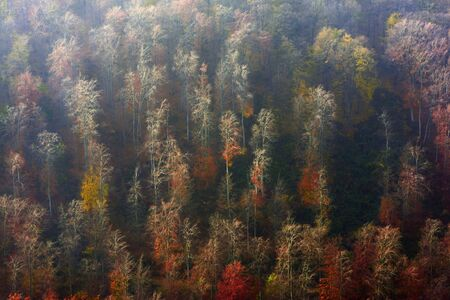 treeline: Aerial view of autumn forest in the mountains