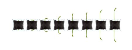 smal: Smal plants isolated against white artistic photo Stock Photo