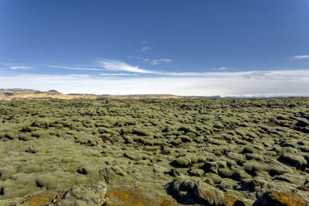 lava field: Iceland lava field covered with green moss from volcano eruption