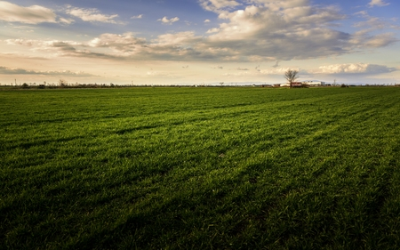 cultivated land: Cultivated land with cloudy sky and horizon Stock Photo