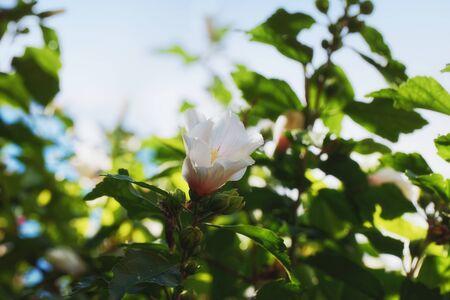 White flower blooming close up photo Reklamní fotografie