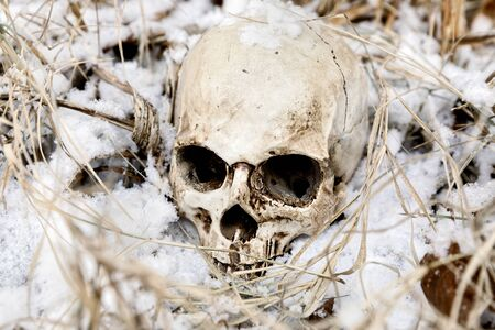 Creepy human skull on the tree closeup Reklamní fotografie