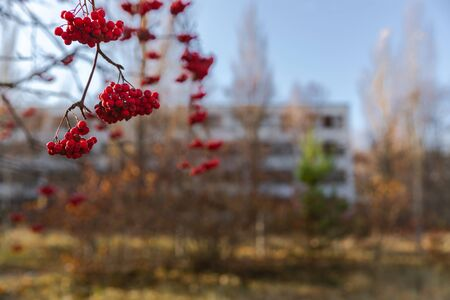 Close up of red berries with blurry background