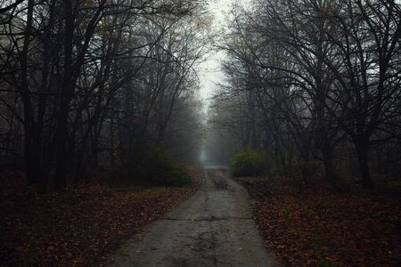 Dark abandoned road in the forest angle shot