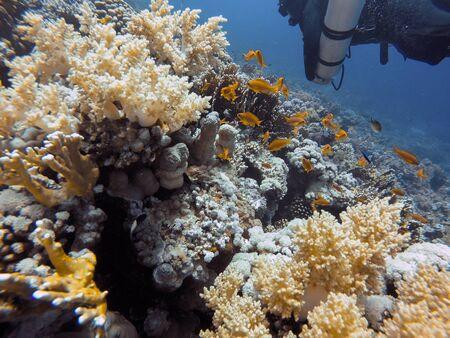 Coral Reef underwater in the sea closeup Reklamní fotografie