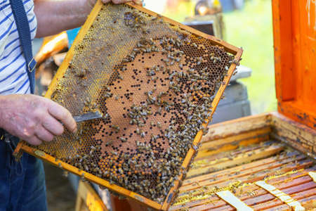 Honey bees on a hive cluster