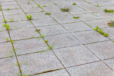 VVegetation popping out from unmaintained concrete floor
