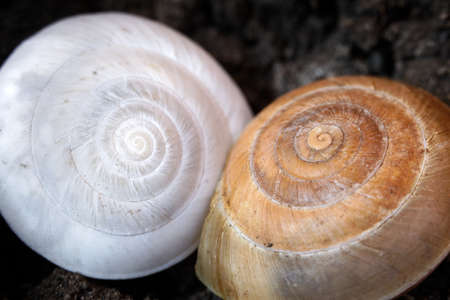 Snail shell on ground level macro photo