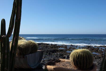 golfo: cactus at the ocean, El Golfo, Lanzaeote