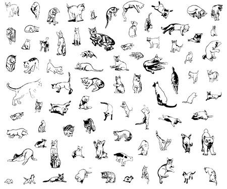 behaviours: un conjunto de gatos en diferentes poses