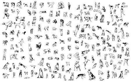 behaviours: un conjunto de perros en diferentes poses