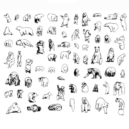 a set of bears in different poses