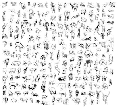 un conjunto de vacas, ovejas, cabras, ciervos, toros, cerdos y etc. en diferentes poses Foto de archivo - 4045702