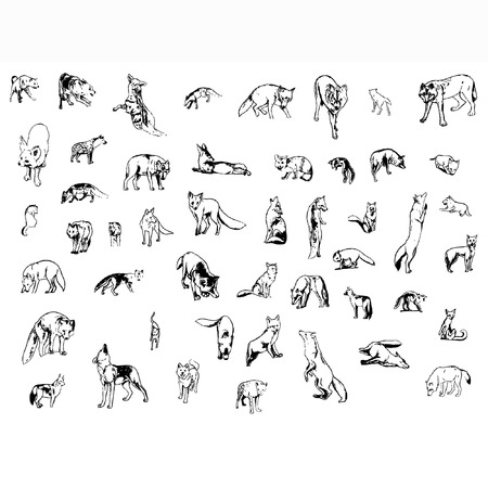 a set of foxes and wolfs in different poses Illustration
