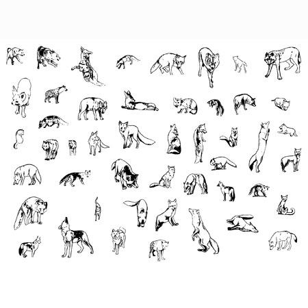 behaviours: un conjunto de zorros y lobos en diferentes poses Vectores