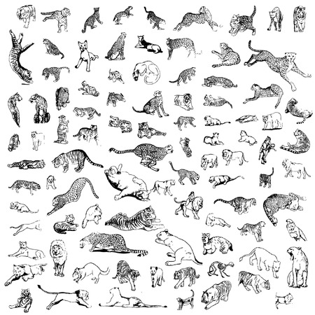 a set of tigers, lions, leopards and cheetahes in different poses