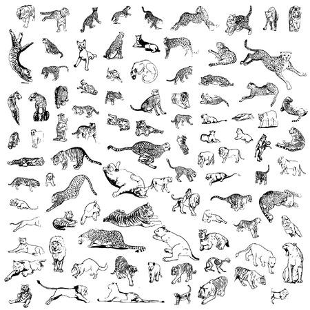 silueta tigre: un conjunto de tigres, leones, leopardos y cheetahes en diferentes poses Vectores