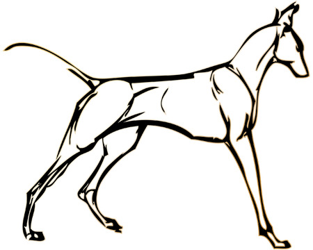 simple drawing of a dog with vector effect