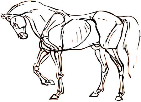 simple drawing of a horse with vector effect