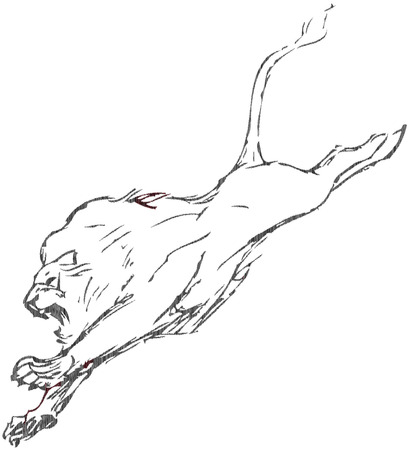 simple drawing of a lion with vector effect