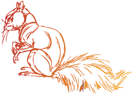 simple drawing of a squirrel with vector effect