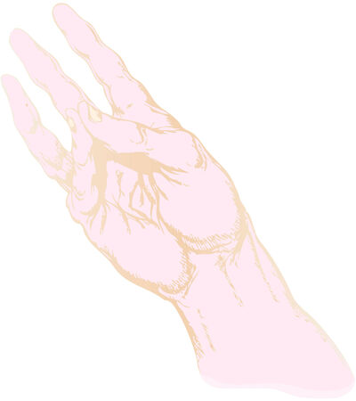truncated: a gesture of the truncated human hand