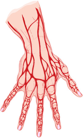 the isolated drawing of a human hand the veins