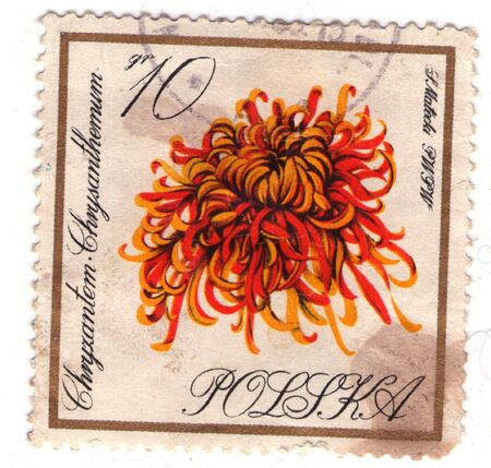 the postage stamp of Poland from personal collection Stock Photo - 6456847