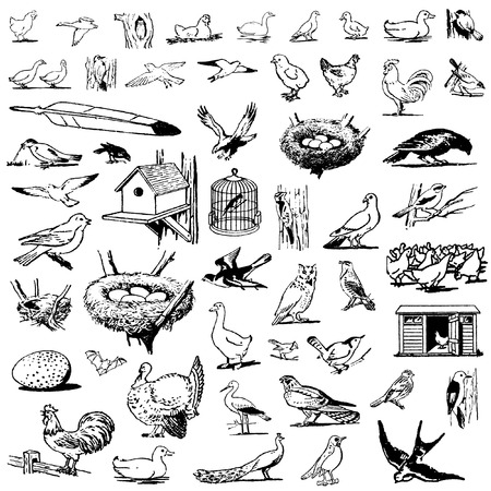 a set of birds in different poses Illustration