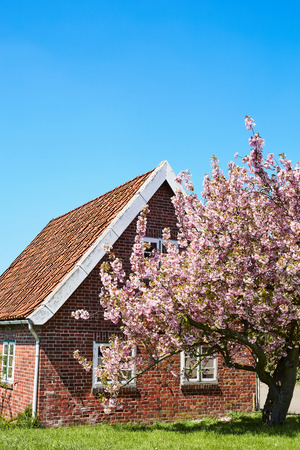 Lilac tree in front of a small house