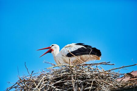 A stork in its nest