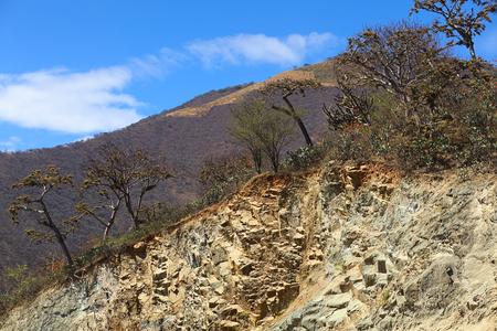 loja: Bosque seco tropical con cactus y �rboles cubiertos de liquen barba (Usnea) en la cima de una colina en la provincia de Loja en el sur de Ecuador Foto de archivo