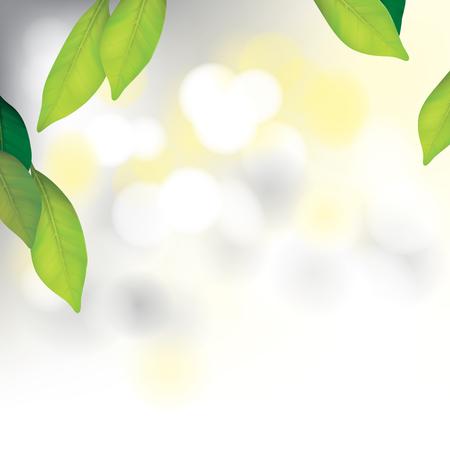 美しいスパの背景の葉ベクター