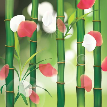 bamboo therapy: Spa Background with Bamboo Illustration