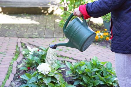 Hand van senior vrouw is bloemen in haar tuin water geven, thuis tuinieren. Gepensioneerde vrouw zorgt voor planten. Senior vrouw handen water geven aan wat bloemen in haar tuin. Stockfoto
