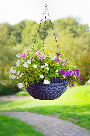 Hanging flower pot. Hanging Garden. A flower pot, hanging on a metal chain . close-up shot of a flower arrangement in basket pot hanging in the garden outside a house.