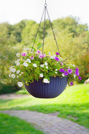 悬挂花盆。悬挂花园。一个花盆,挂在一根金属链子上。近距离拍摄的花篮,挂在花园外的房子。