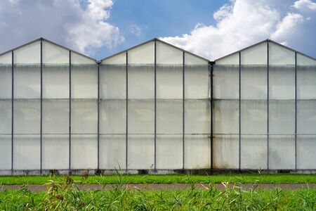 Glasshouses or greenhouses for growing vegetables against a rainy sky. On the outside of the greenhouses in The Netherlands. High tech industrial production of vegetables and flowers.