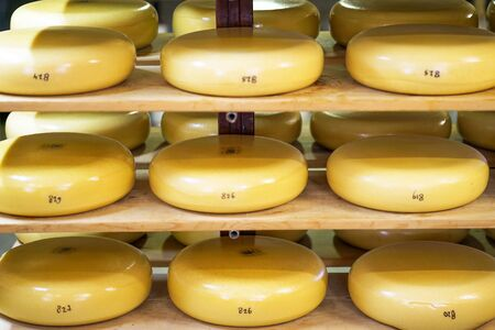 Heads of cheese on wooden shelves in a private farm. A lot of yellow heads of cheese on shelves. Close-up of yellow round cheeses on wooden shelves. Banco de Imagens