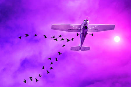 Airliner landing with a flock of birds flying around. Airplane collision with flock of birds at sunset sky, disaster. Airplane and flock of birds 免版税图像