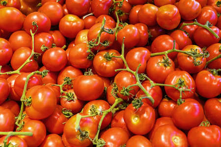 Red tomatoes background. Group of tomatoes. Many red tomatoes background. Selective focus 免版税图像