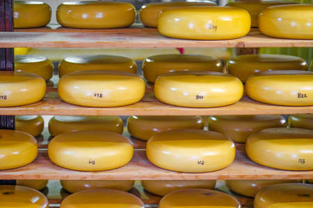 Rows yellow cheese pieces on wooden shelves