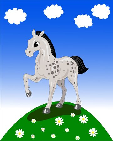 spotted foal in the meadow with flowers Stock Vector - 16673020
